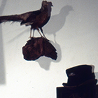Wunderkammer 1993